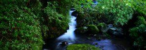 富士屋旅館 温泉